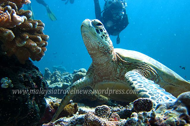 Sabah Marine Tourism