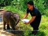 Baby Pygmy Elephant